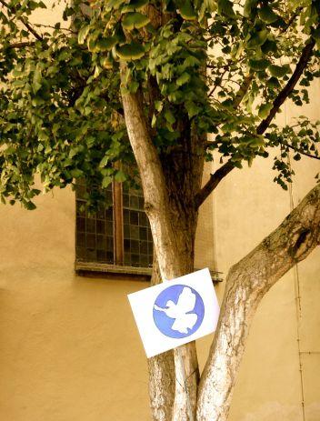 Friedenstaubenbaum